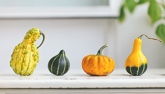 Four different gourds